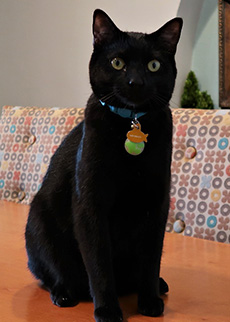 Oliver's Profile Image
